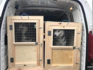 Pets Abroad crates